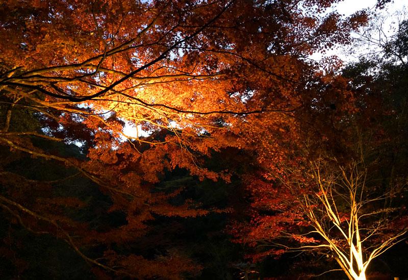小松寺の紅葉ライトアップ