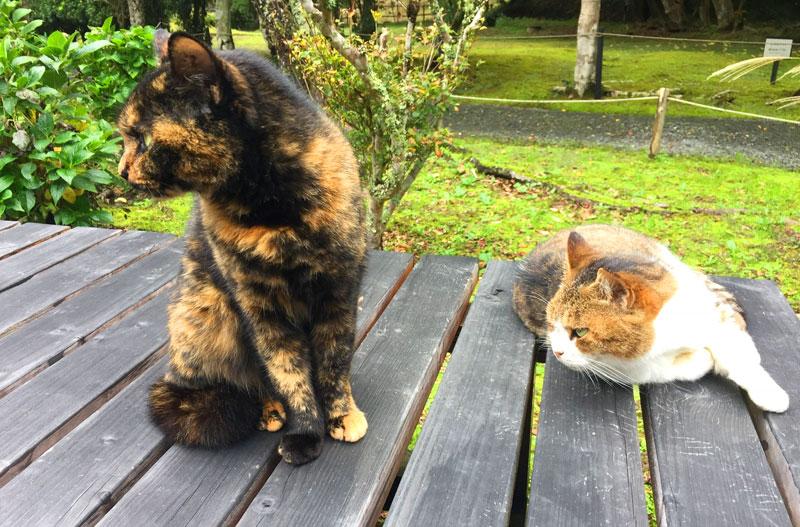 小松寺副住職の保護猫「たま」と「こまつ」