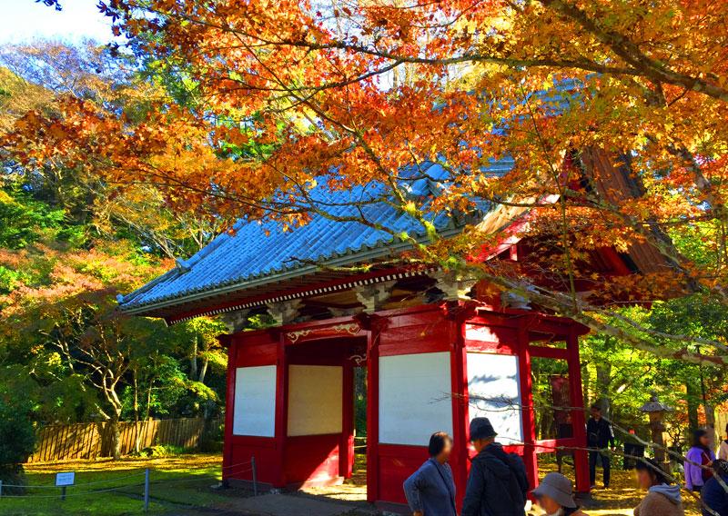 南房総の紅葉スポット観光なら小松寺へ!夜はライトアップで幻想的!