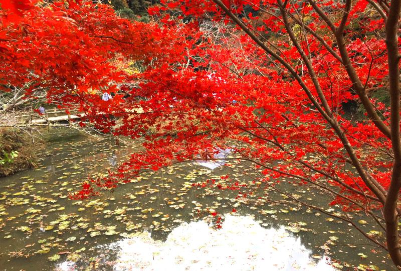 小松寺の紅葉 池