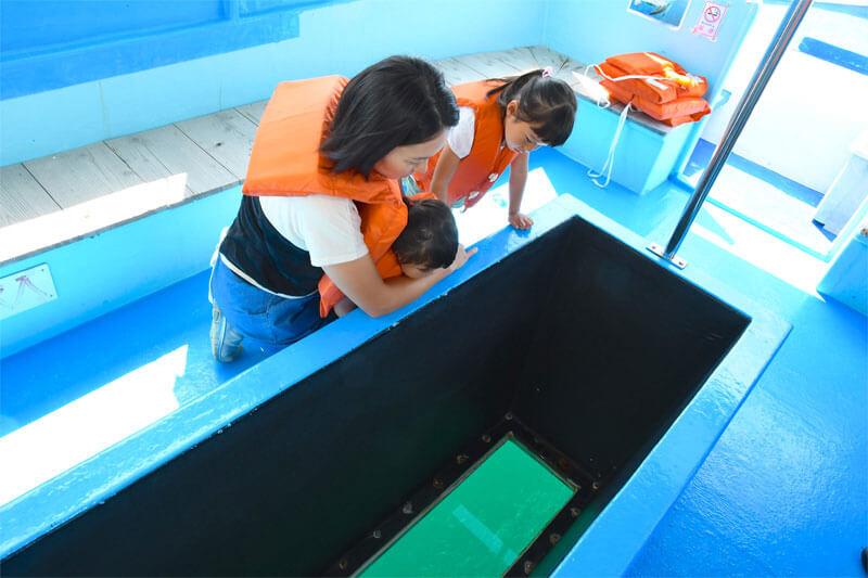 海底が見える野島崎海底透視船はお子様にもおすすめ